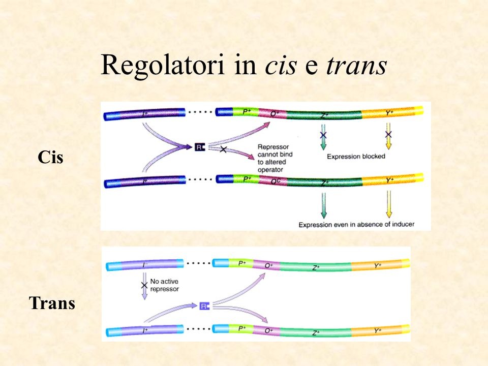 Regolatori in cis e trans
