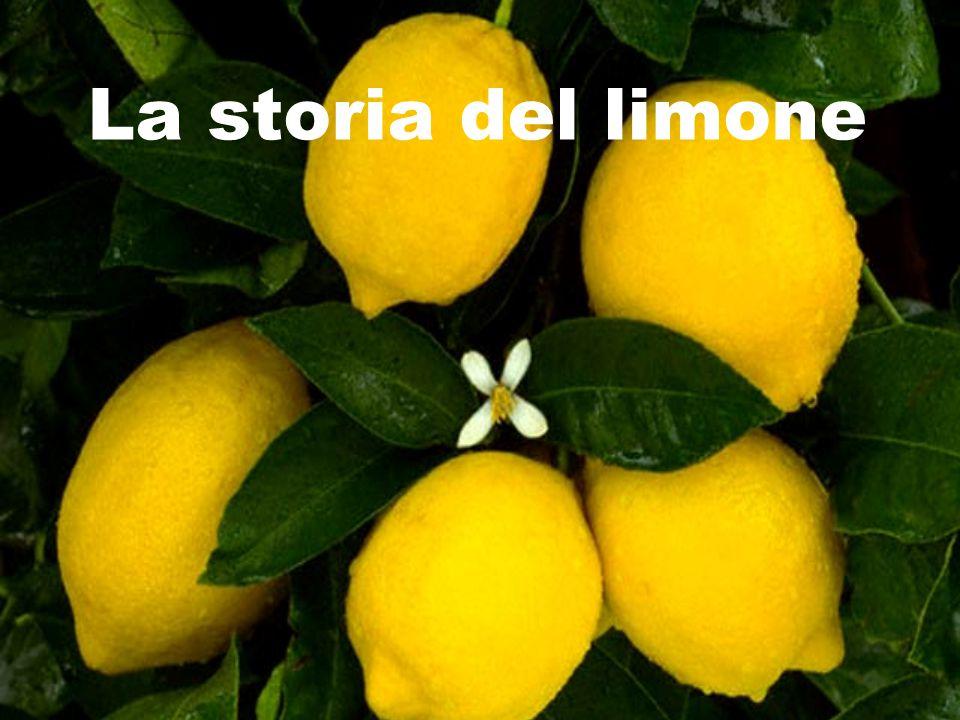 La storia del limone
