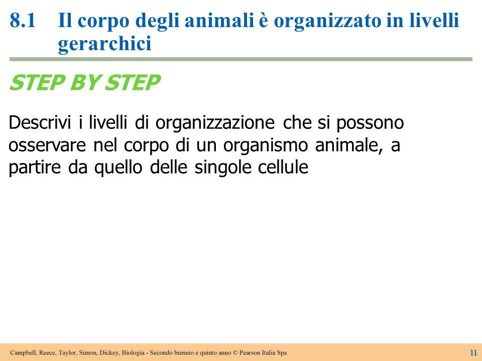 8.1 Il corpo degli animali è organizzato in livelli gerarchici