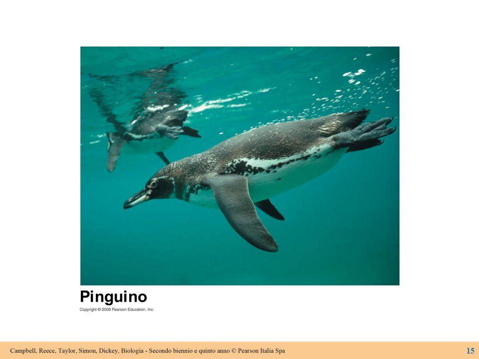 Figura 8.2 La forma aerodinamica degli organismi accomunati dal fatto di essere veloci nuotatori è un esempio di evoluzione convergente.