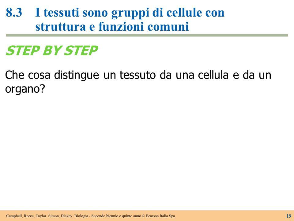8.3 I tessuti sono gruppi di cellule con struttura e funzioni comuni
