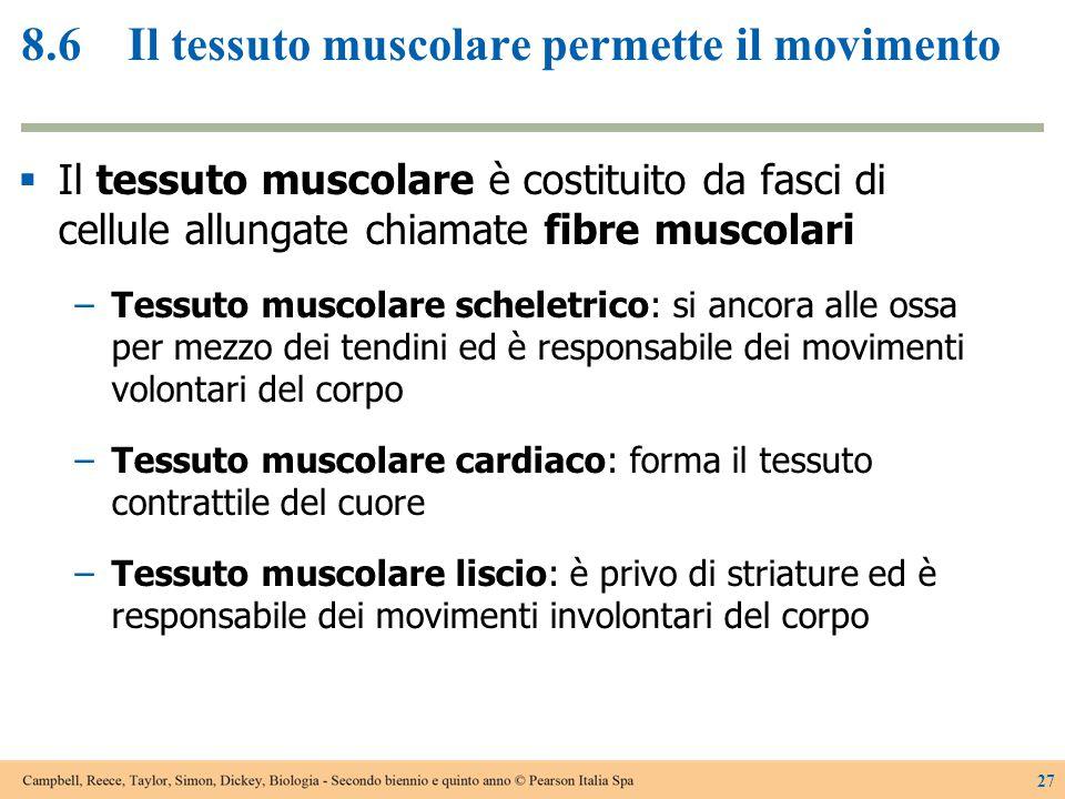 8.6 Il tessuto muscolare permette il movimento