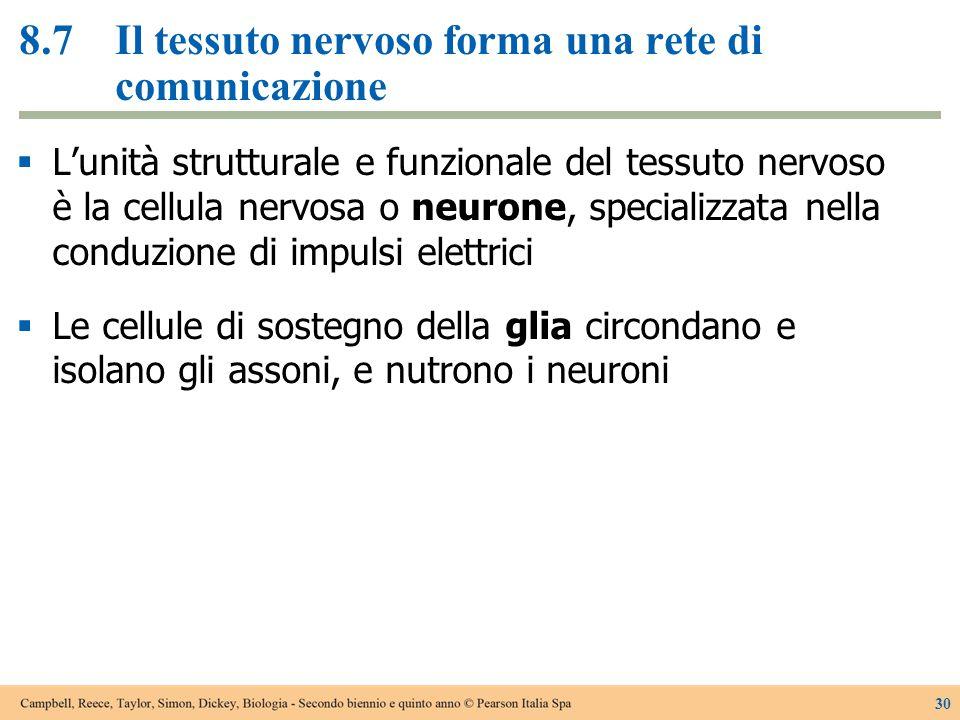 8.7 Il tessuto nervoso forma una rete di comunicazione