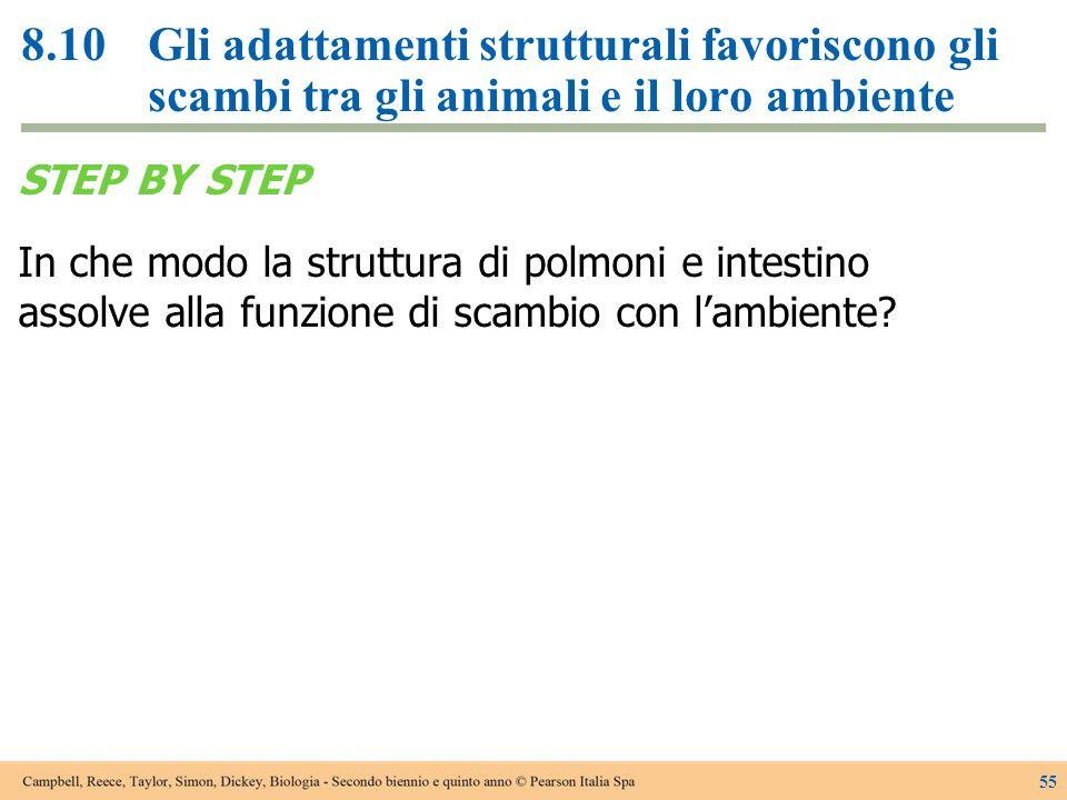 8.10 Gli adattamenti strutturali favoriscono gli scambi tra gli animali e il loro ambiente