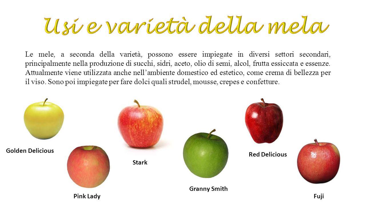 Usi e varietà della mela