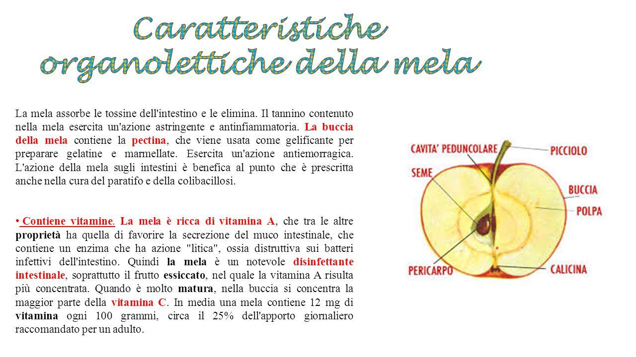 Caratteristiche organolettiche della mela