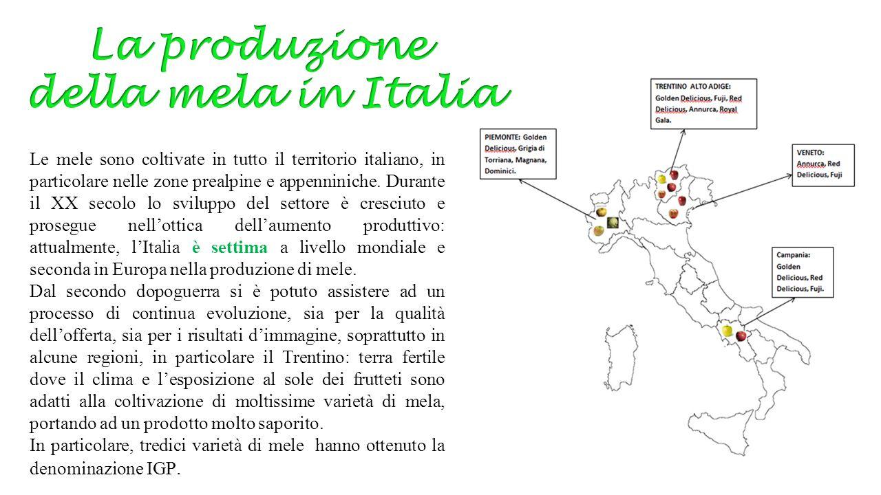 La produzione della mela in Italia