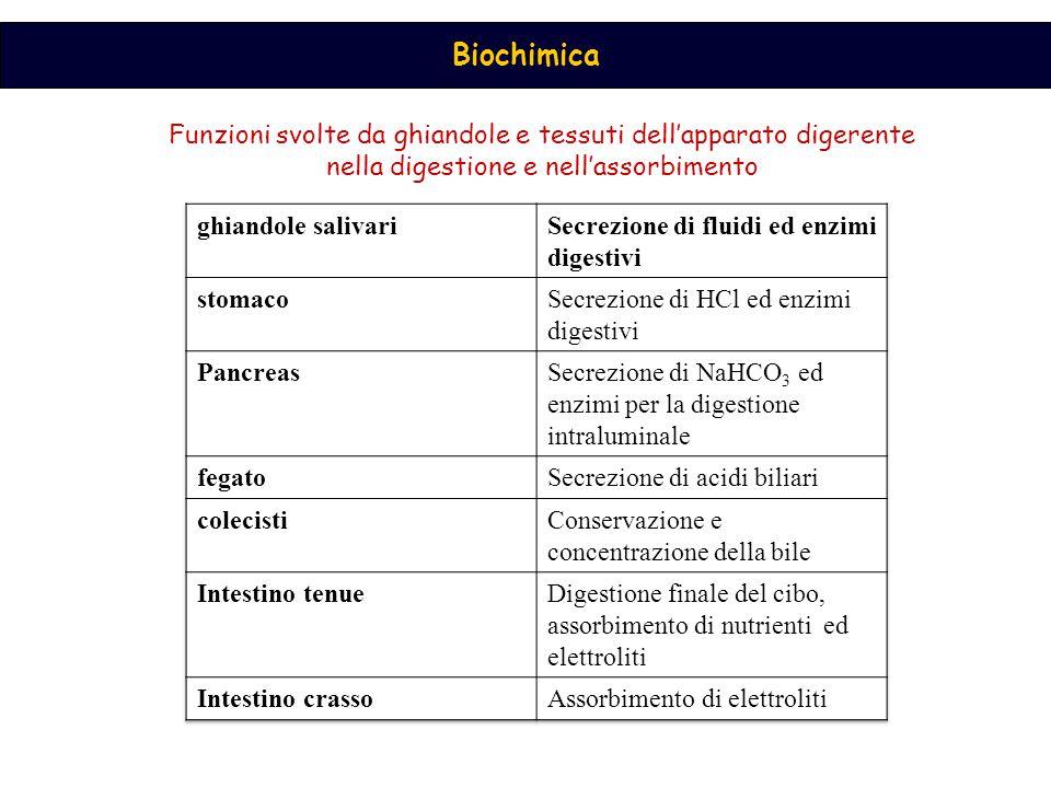 Funzioni svolte da ghiandole e tessuti dell'apparato digerente nella digestione e nell'assorbimento