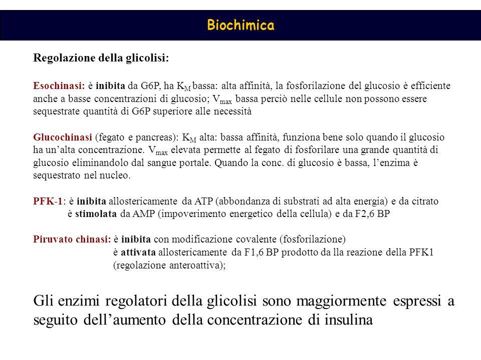 Regolazione della glicolisi: