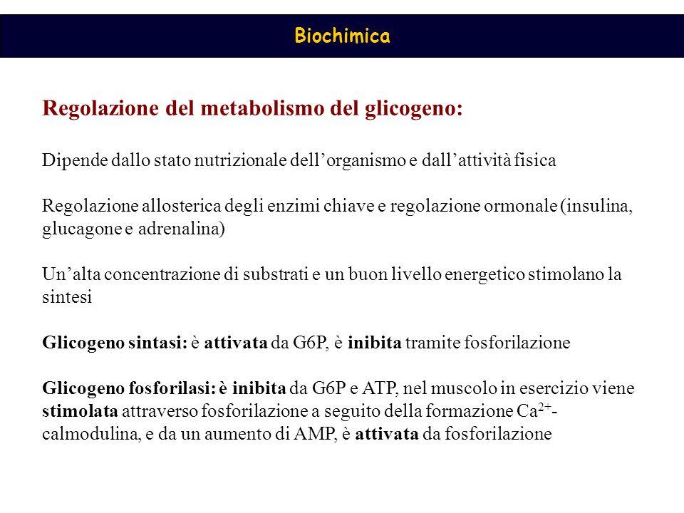 Regolazione del metabolismo del glicogeno:
