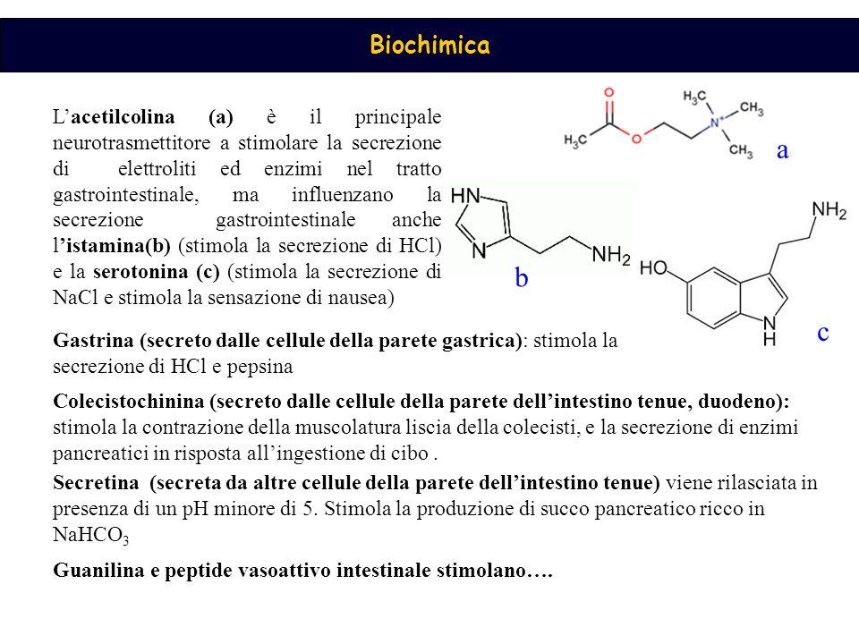 L'acetilcolina (a) è il principale neurotrasmettitore a stimolare la secrezione di elettroliti ed enzimi nel tratto gastrointestinale, ma influenzano la secrezione gastrointestinale anche l'istamina(b) (stimola la secrezione di HCl) e la serotonina (c) (stimola la secrezione di NaCl e stimola la sensazione di nausea)