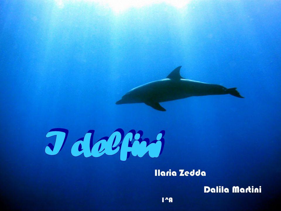 I delfini Ilaria Zedda Dalila Martini 1^A