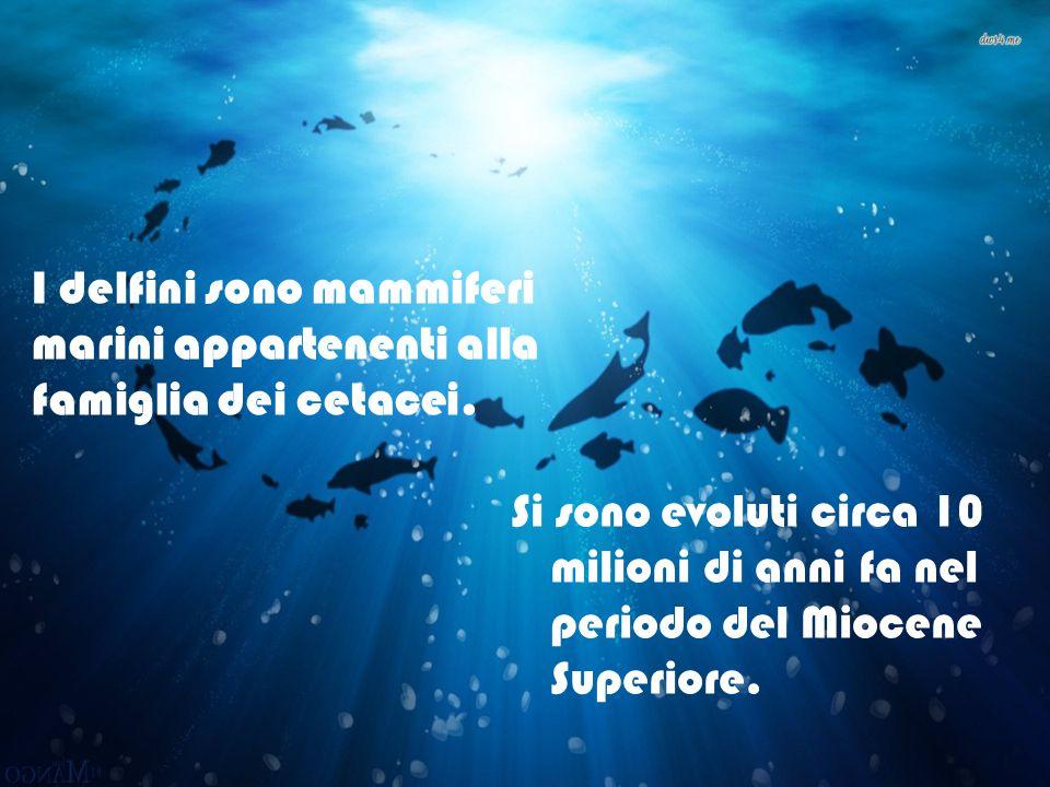 I delfini sono mammiferi marini appartenenti alla famiglia dei cetacei.