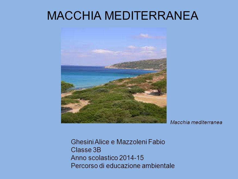 MACCHIA MEDITERRANEA Ghesini Alice e Mazzoleni Fabio Classe 3B