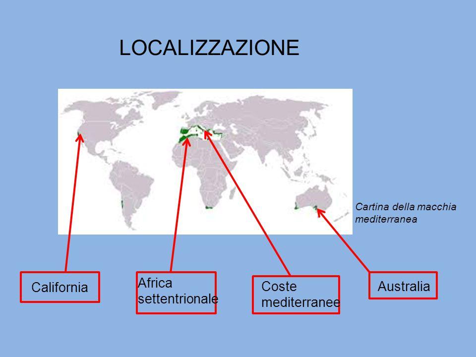 LOCALIZZAZIONE California Africa settentrionale Coste mediterranee