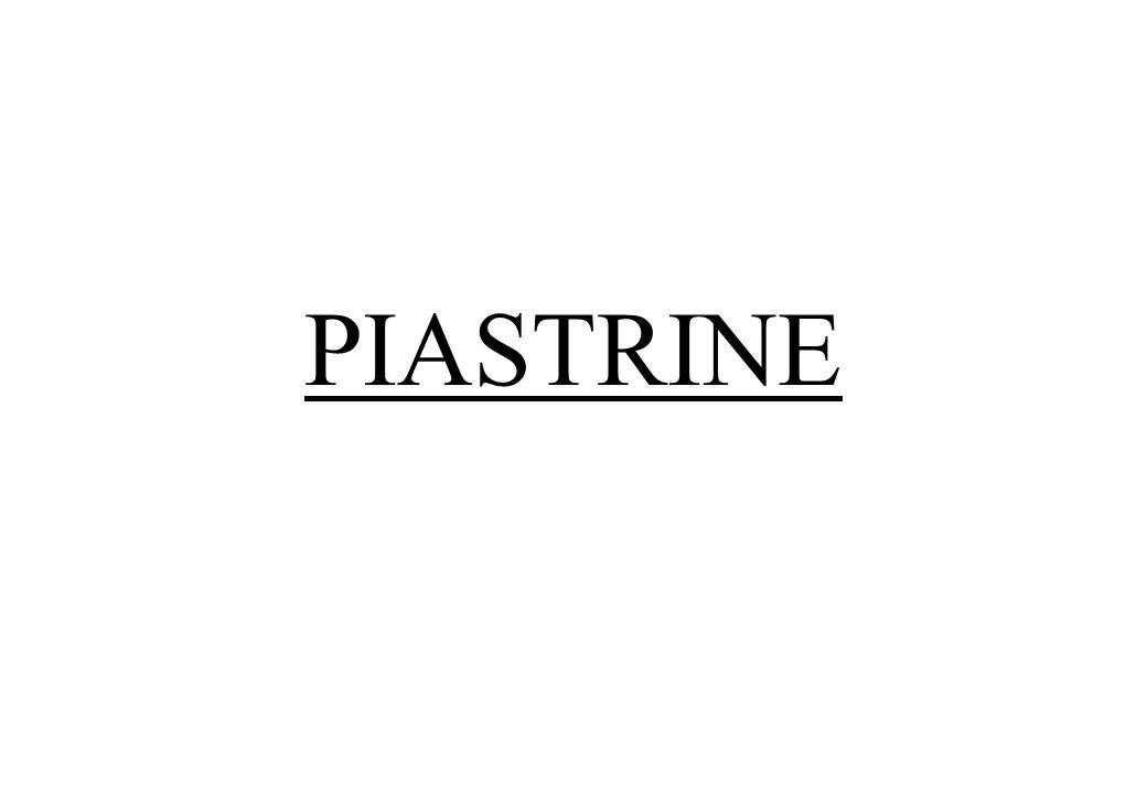 PIASTRINE