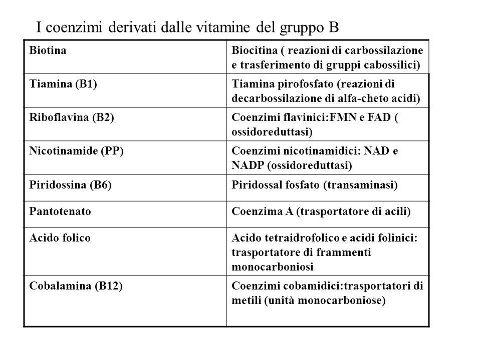 I coenzimi derivati dalle vitamine del gruppo B