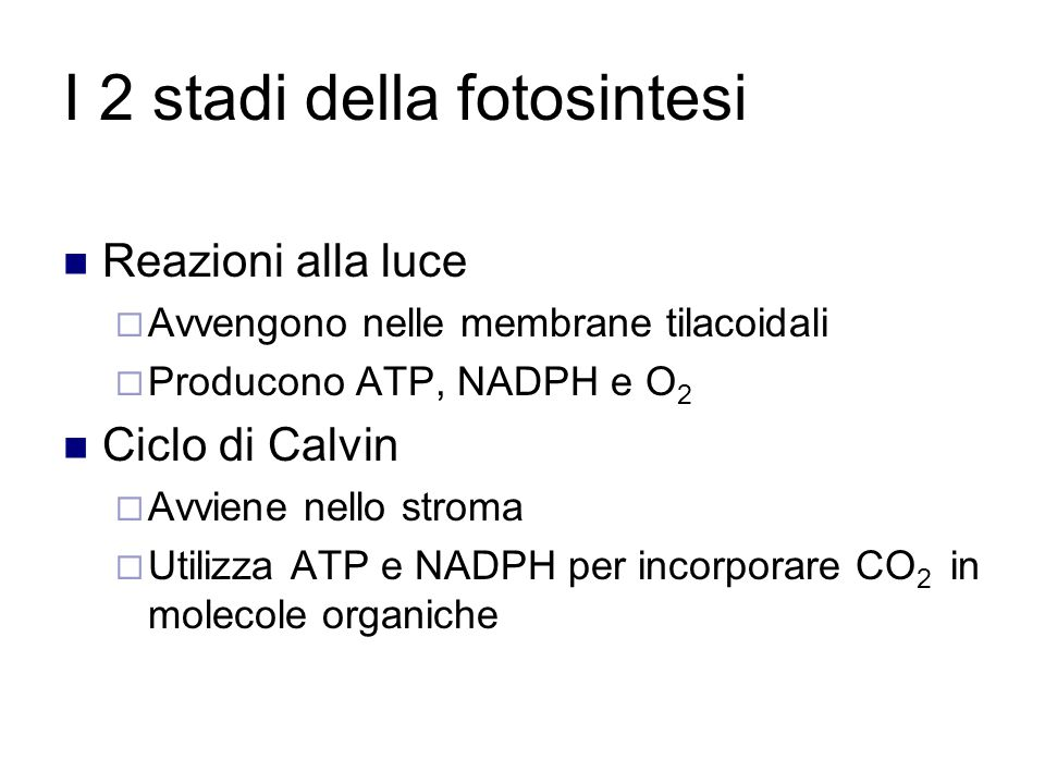 I 2 stadi della fotosintesi
