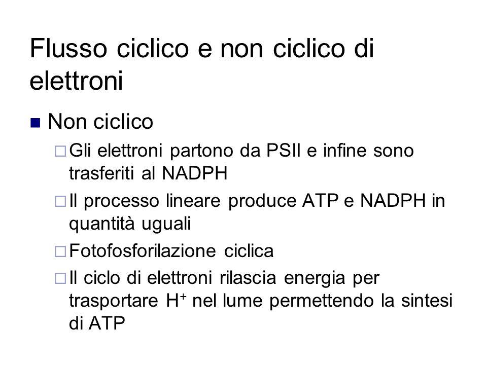 Flusso ciclico e non ciclico di elettroni