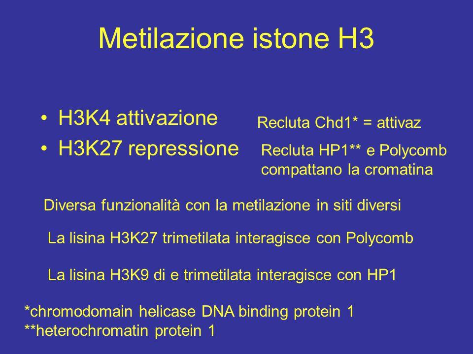 Metilazione istone H3 H3K4 attivazione H3K27 repressione