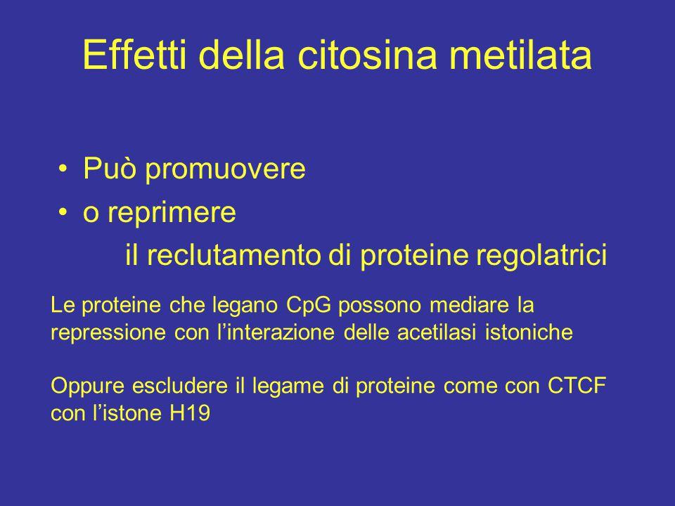 Effetti della citosina metilata