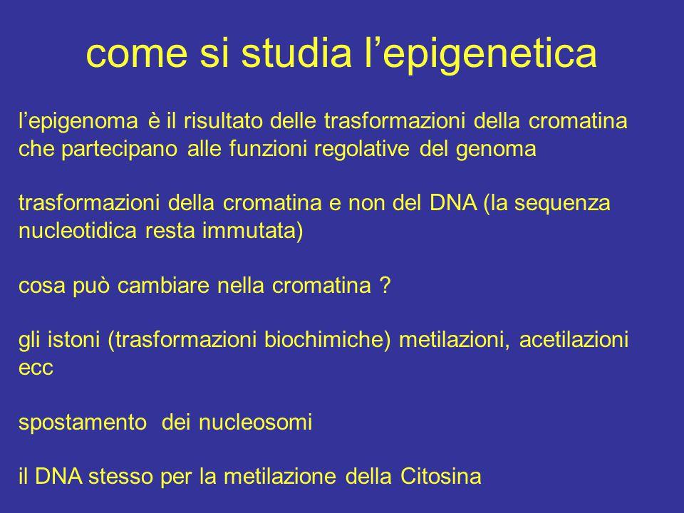 come si studia l'epigenetica