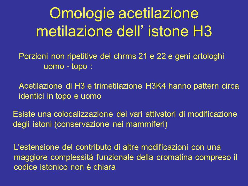 Omologie acetilazione metilazione dell' istone H3