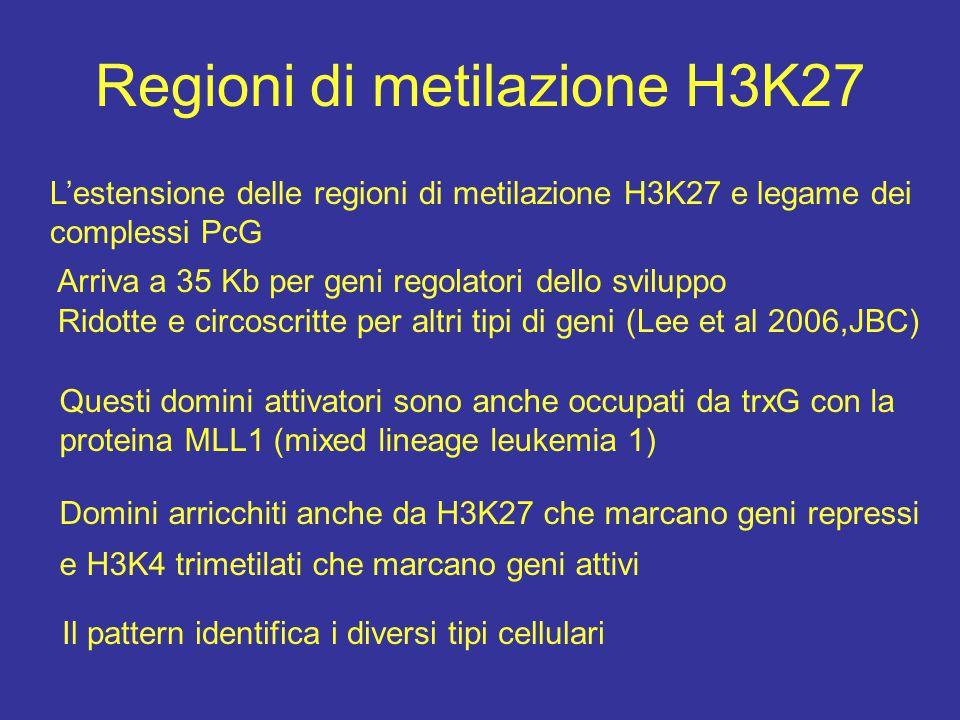 Regioni di metilazione H3K27