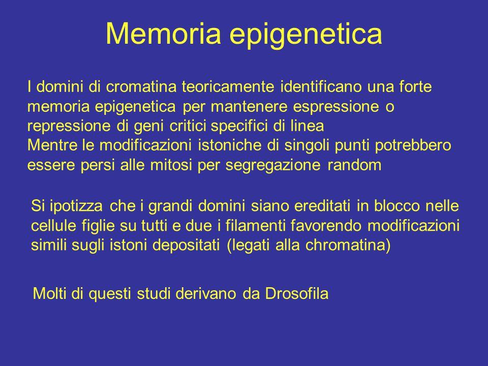Memoria epigenetica