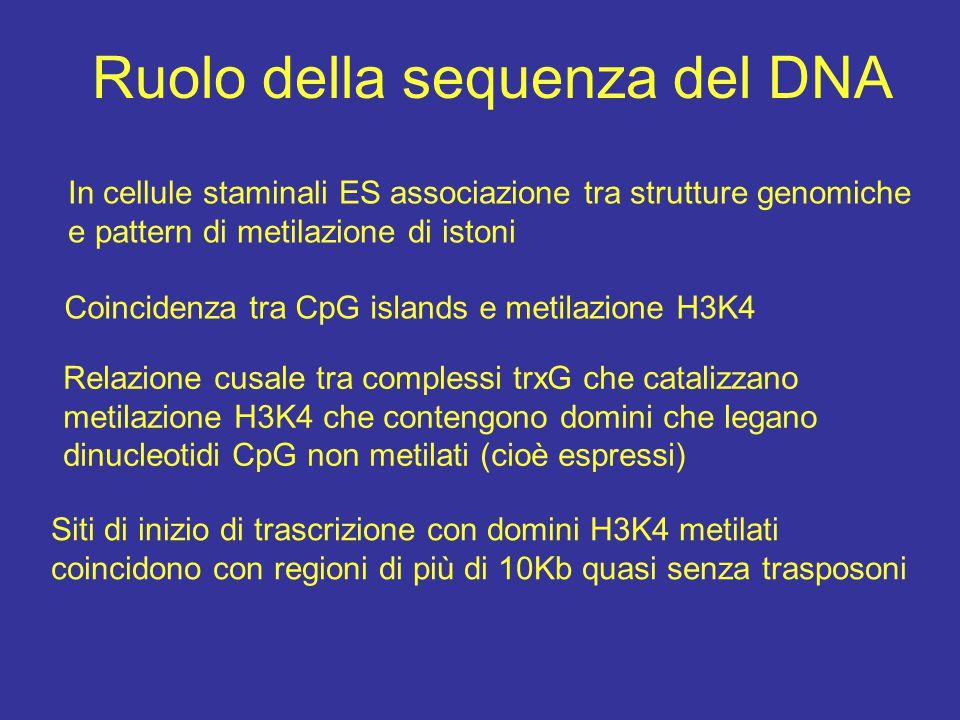 Ruolo della sequenza del DNA