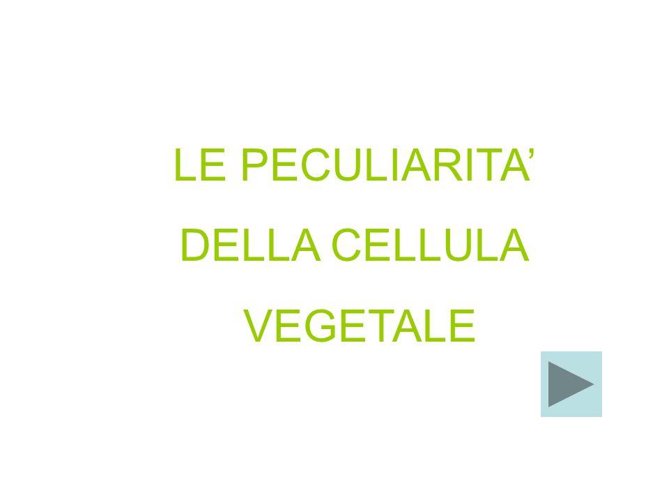 LE PECULIARITA' DELLA CELLULA VEGETALE