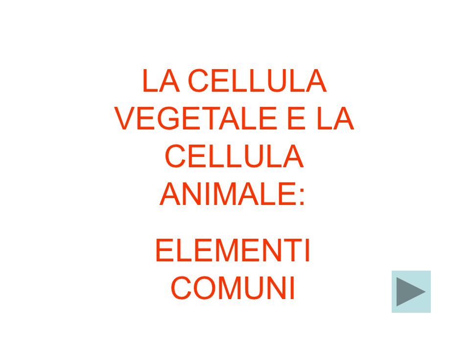 LA CELLULA VEGETALE E LA CELLULA ANIMALE: