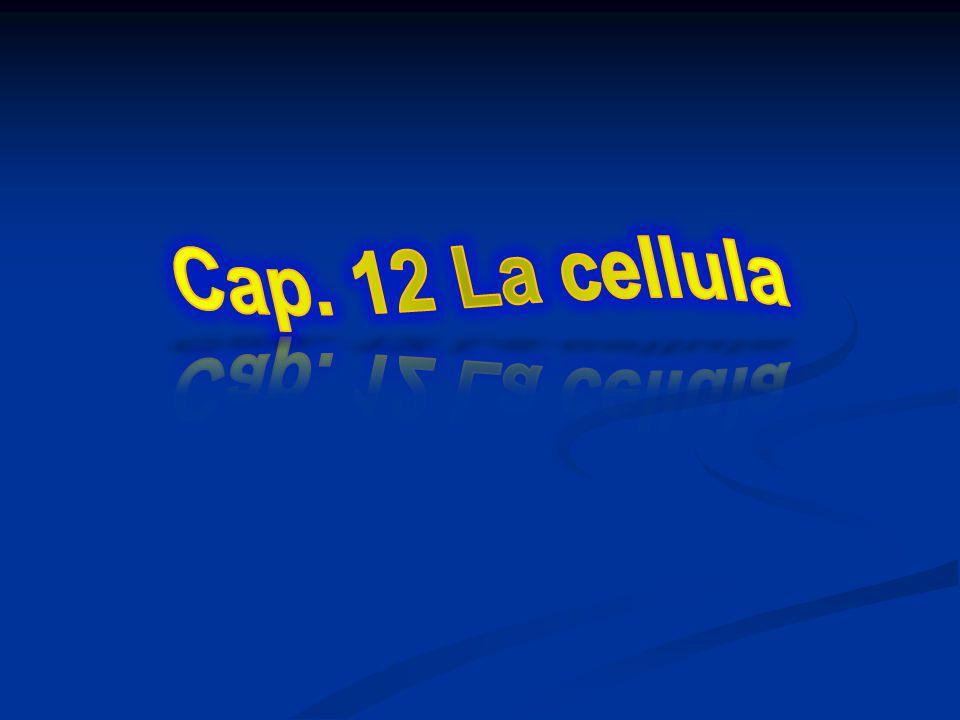 Cap. 12 La cellula