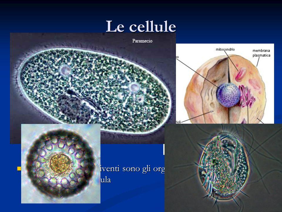 Le cellule Con l'invenzione del microscopio l'uomo ha potuto esplorare il mondo degli oggetti molto piccoli.