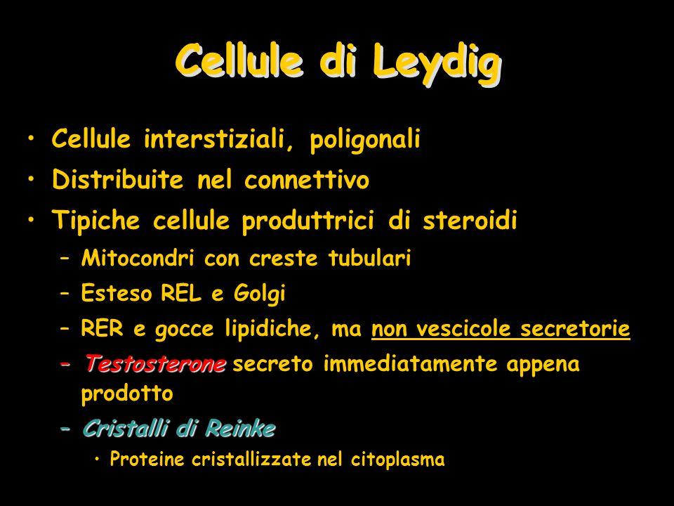 Cellule di Leydig Cellule interstiziali, poligonali