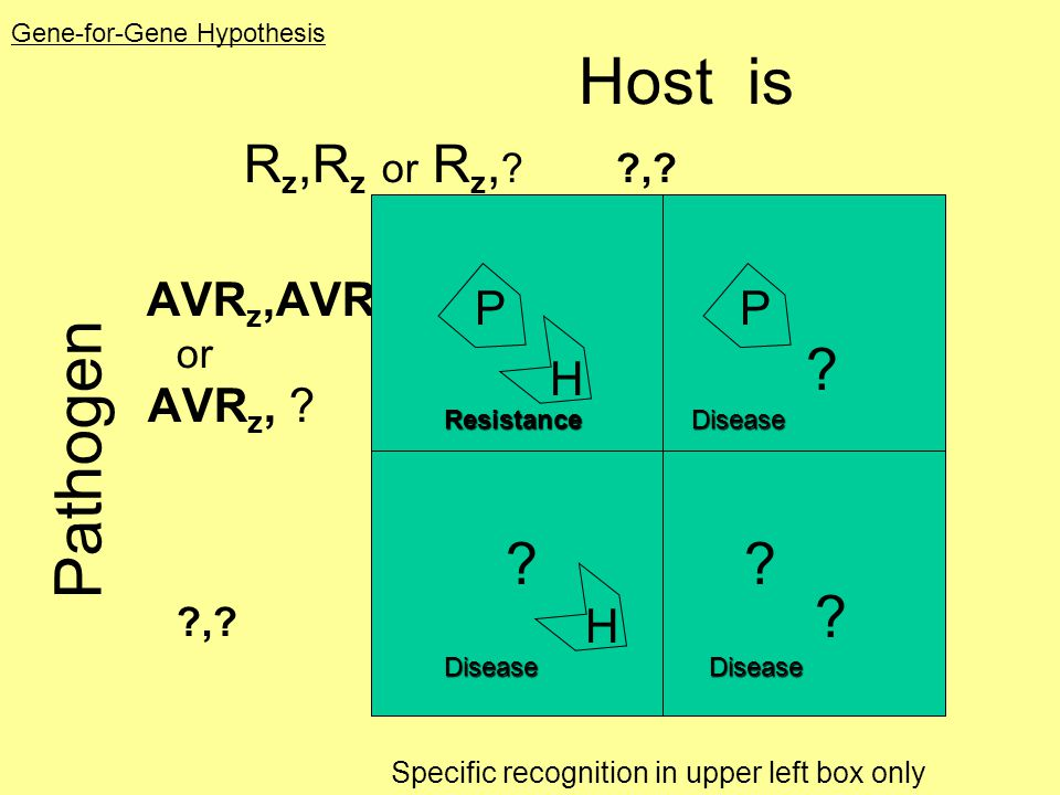 Pathogen Host is Rz,Rz or Rz, , P H AVRz,AVRz or AVRz, ,