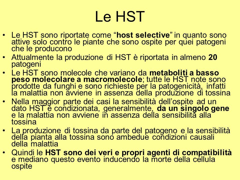 Le HST Le HST sono riportate come host selective in quanto sono attive solo contro le piante che sono ospite per quei patogeni che le producono.