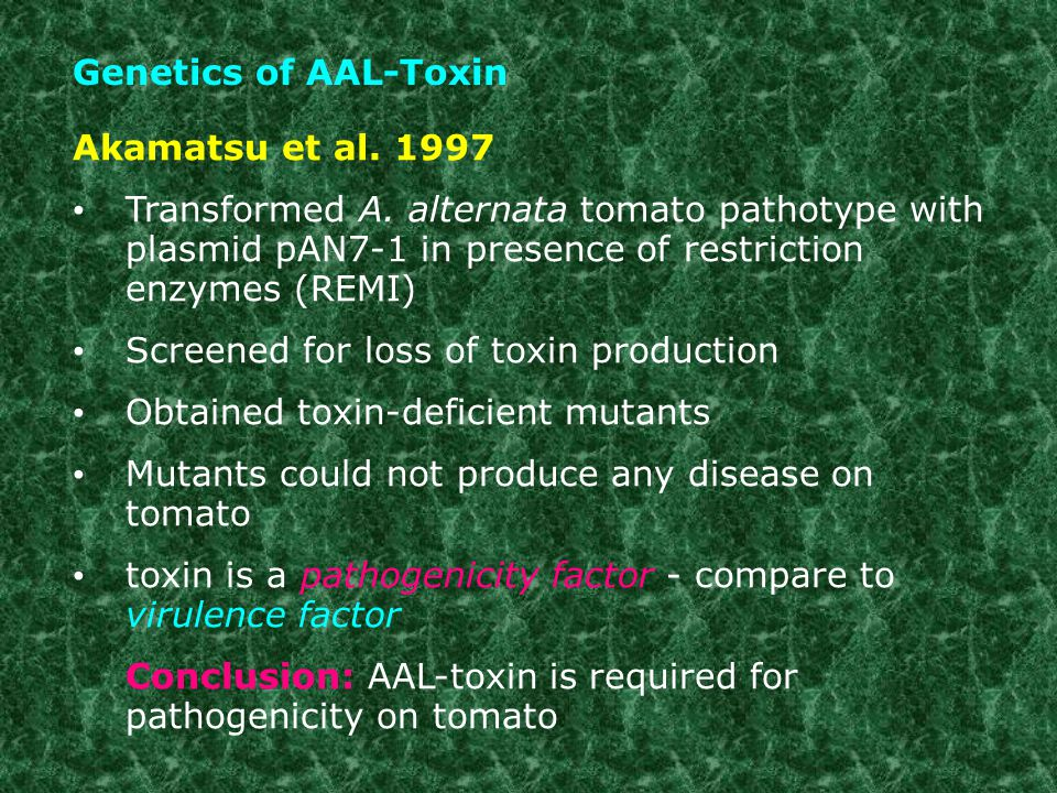Genetics of AAL-Toxin Akamatsu et al. 1997. Transformed A. alternata tomato pathotype with plasmid pAN7-1 in presence of restriction enzymes (REMI)