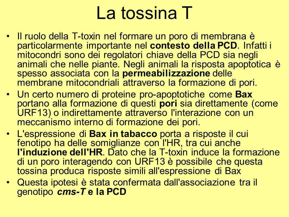 La tossina T