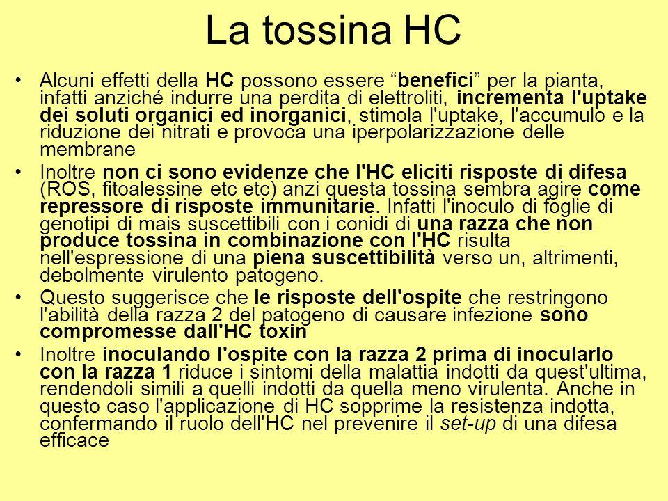 La tossina HC