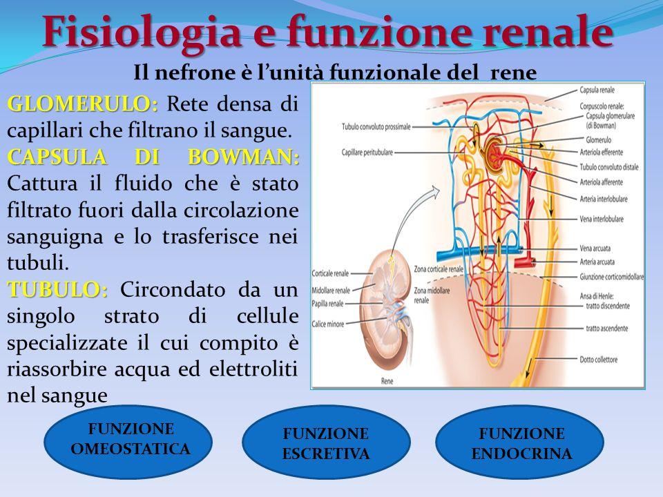 Fisiologia e funzione renale