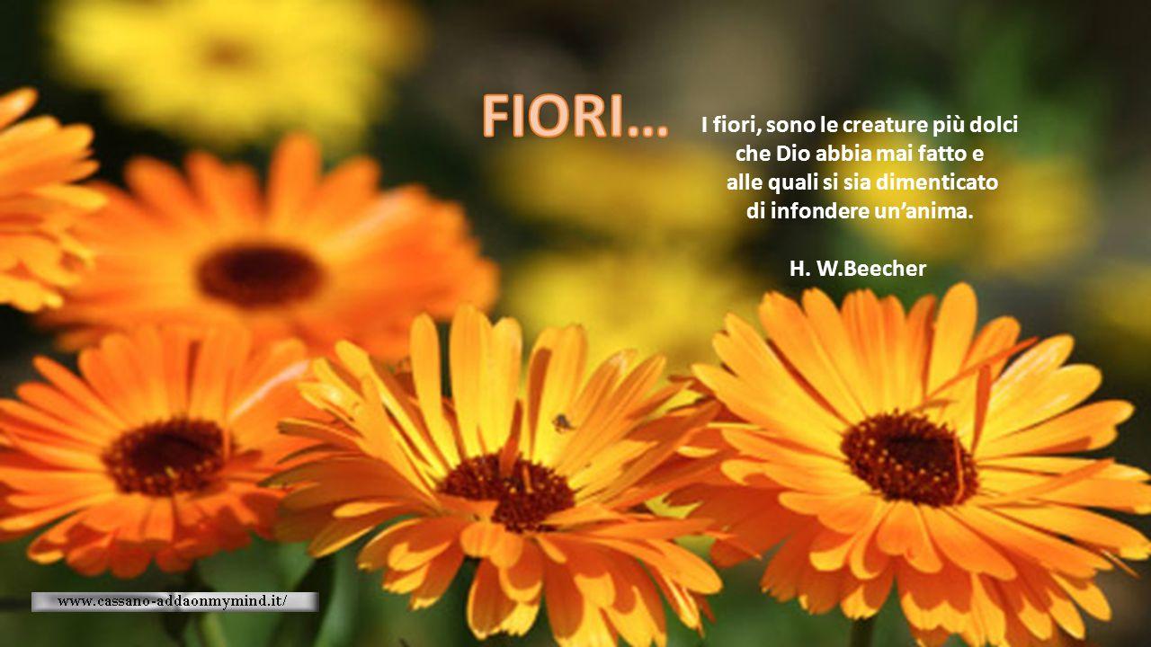 FIORI… I fiori, sono le creature più dolci che Dio abbia mai fatto e