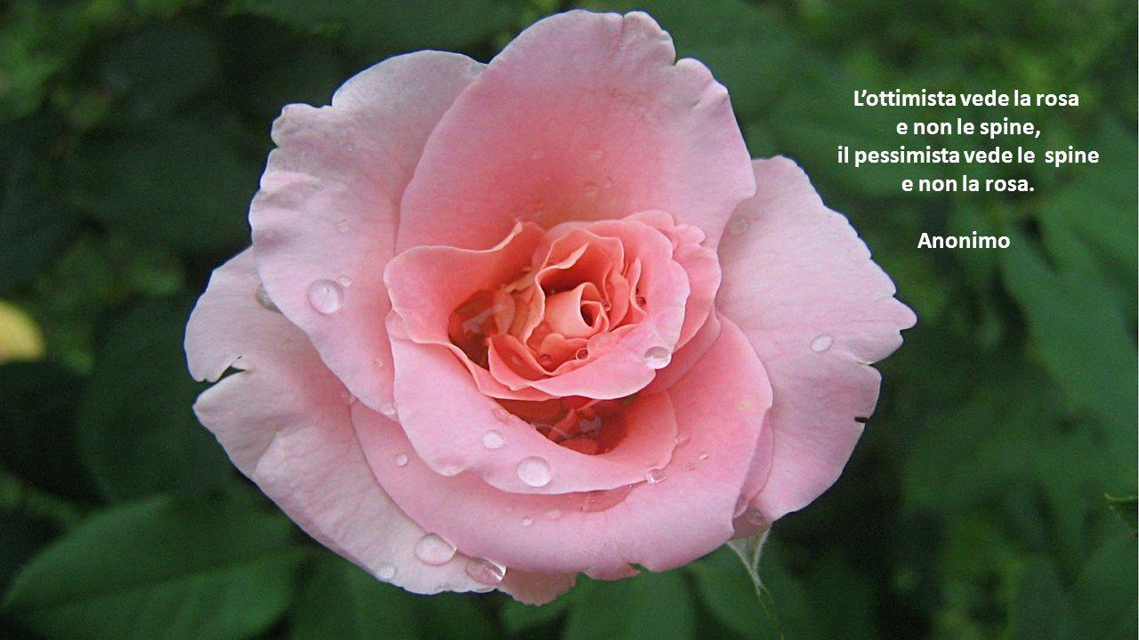 L'ottimista vede la rosa il pessimista vede le spine