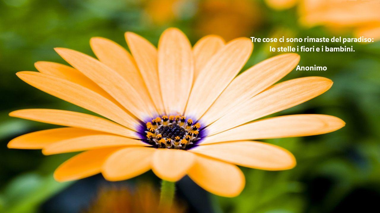 Tre cose ci sono rimaste del paradiso: le stelle i fiori e i bambini.