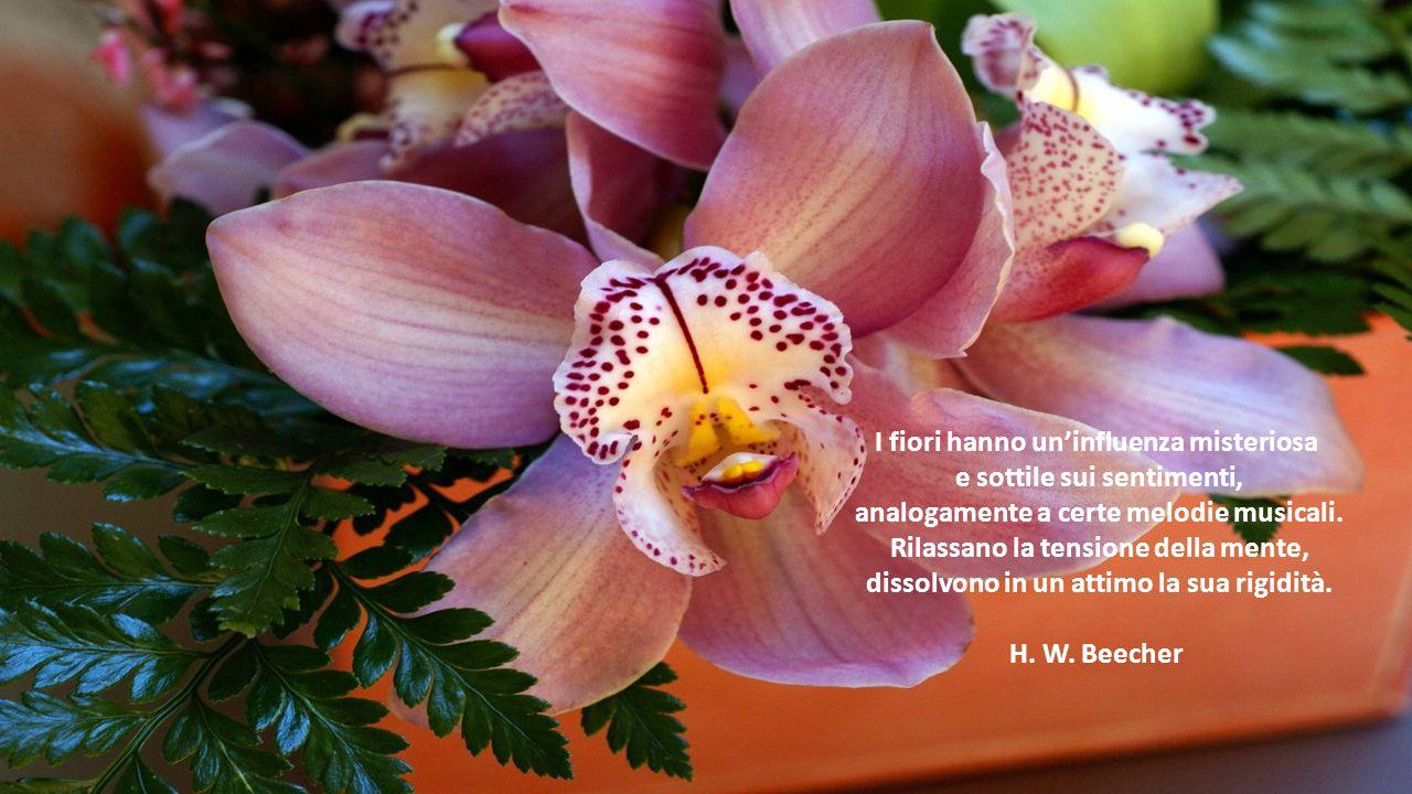 I fiori hanno un'influenza misteriosa e sottile sui sentimenti,