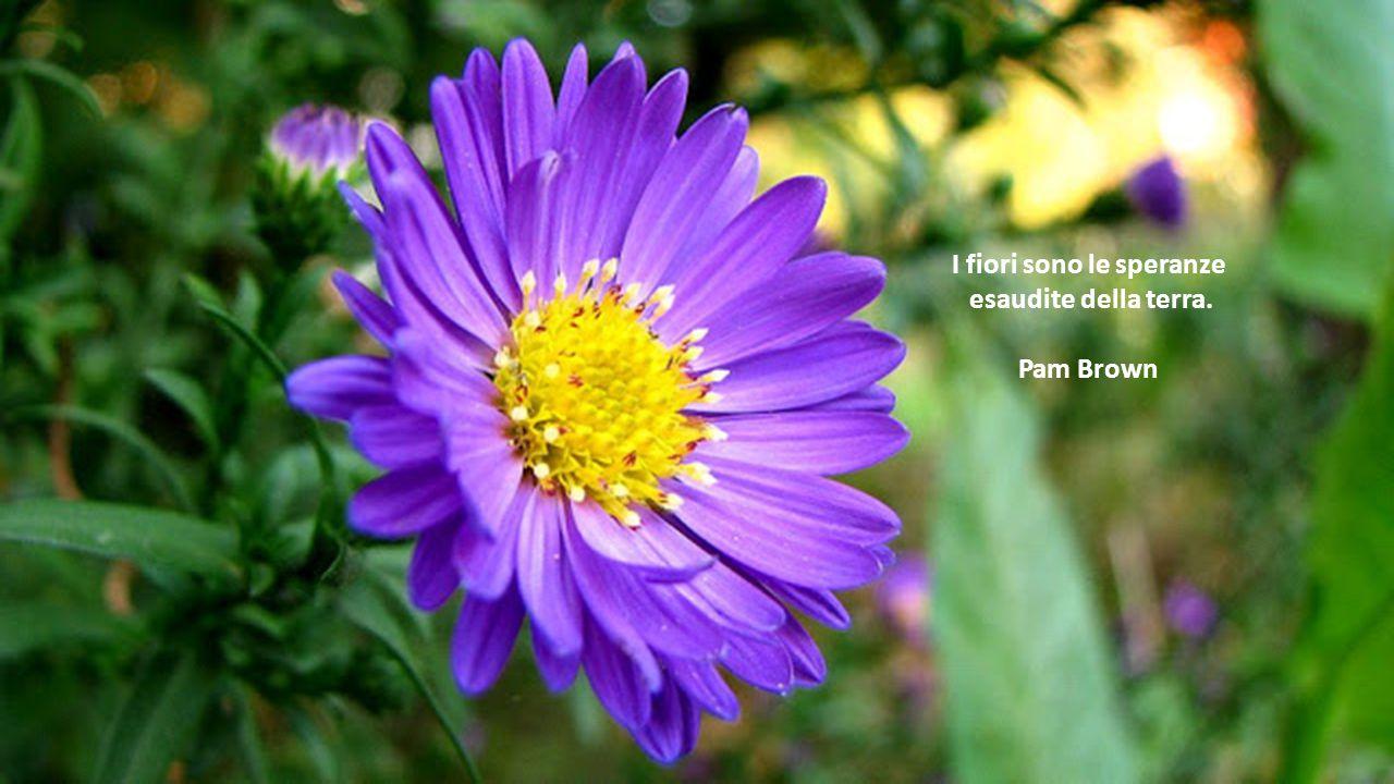I fiori sono le speranze
