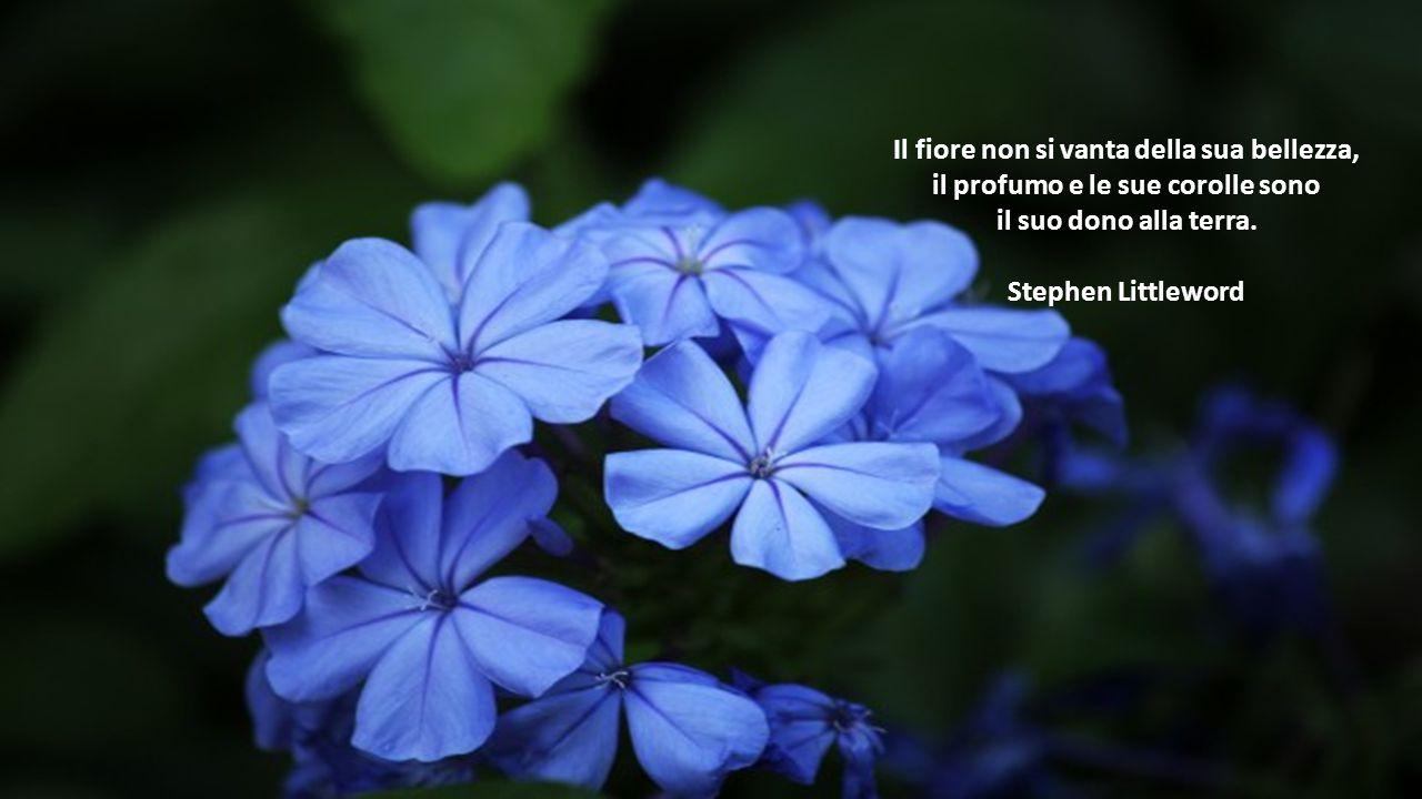 Il fiore non si vanta della sua bellezza,
