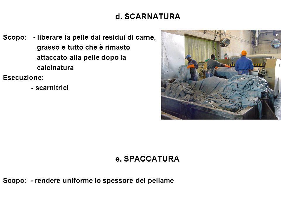 d. SCARNATURA Scopo: - liberare la pelle dai residui di carne, grasso e tutto che è rimasto. attaccato alla pelle dopo la.