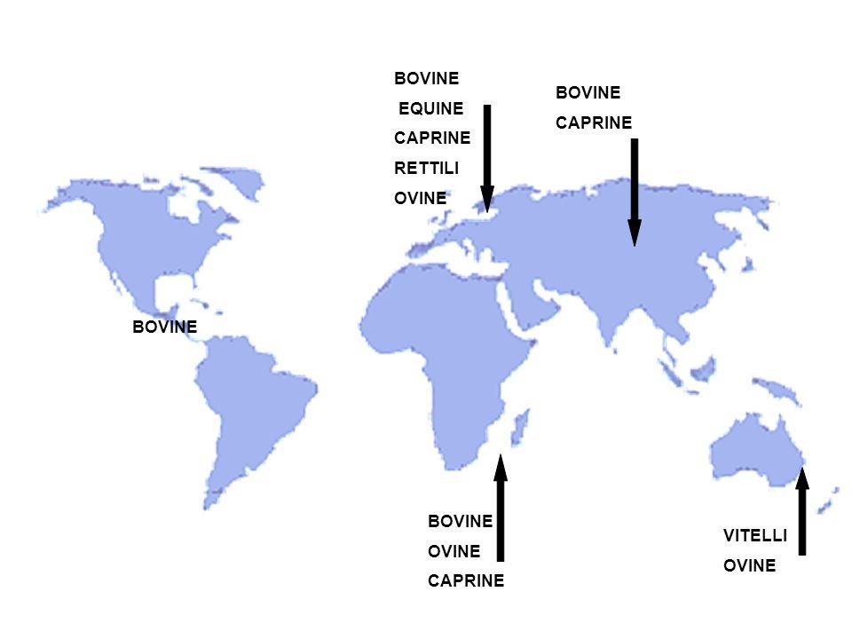 BOVINE EQUINE CAPRINE RETTILI OVINE BOVINE CAPRINE BOVINE BOVINE OVINE CAPRINE VITELLI OVINE
