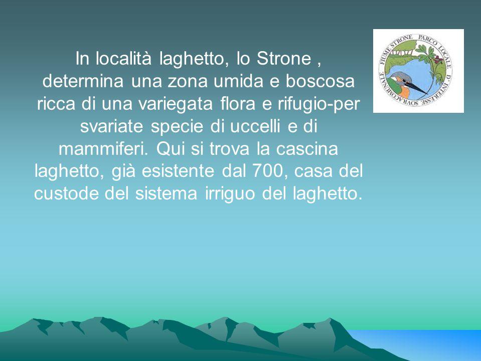 In località laghetto, lo Strone , determina una zona umida e boscosa ricca di una variegata flora e rifugio-per svariate specie di uccelli e di mammiferi.